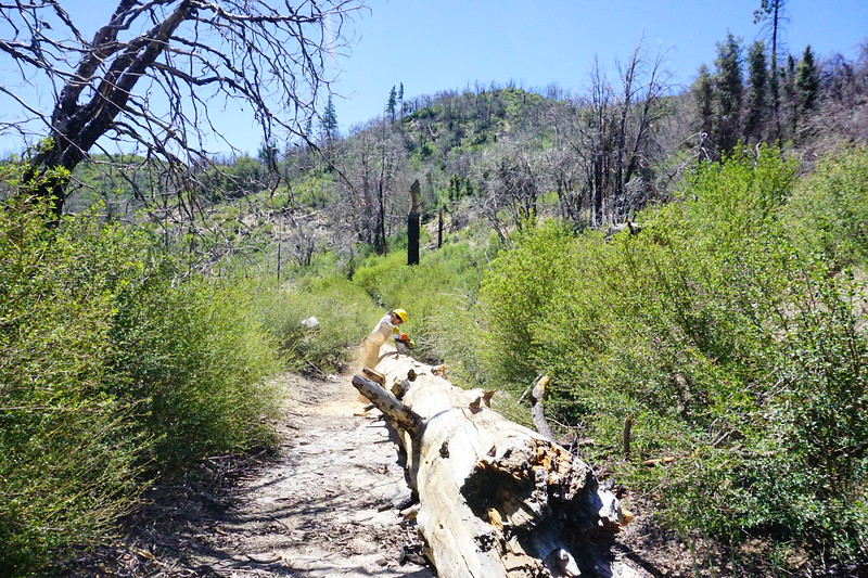 20170430001-Vetter Chainsaw Trailwork.JPG