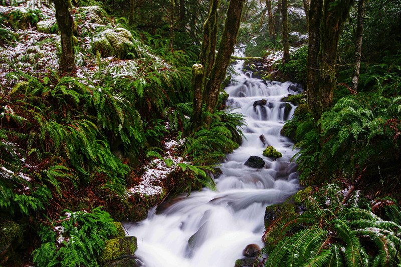 Unnamed stream, North Santiam River Canyon