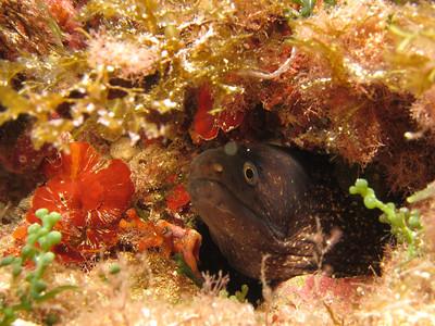 20120921 Dive, Port Pollensa