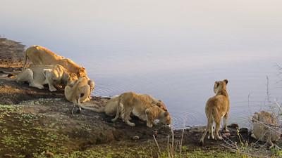 Kruger Park 2016