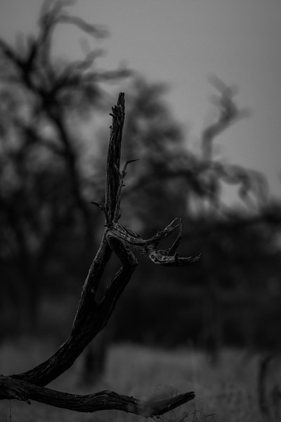 Botswana_June_2017 (2232 of 6179).jpg