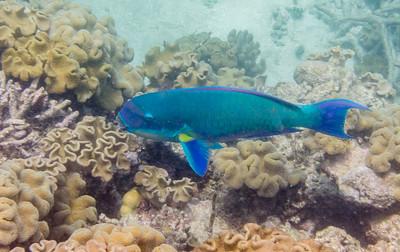 Great Barrier Reef Marine Park - Australia