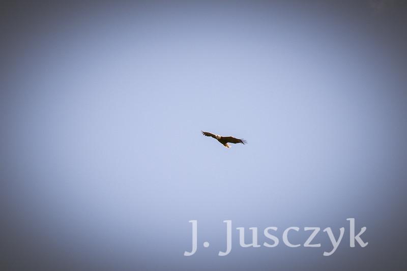 Jusczyk2021-6827.jpg