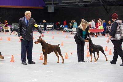 2016-01-23 Dog Show