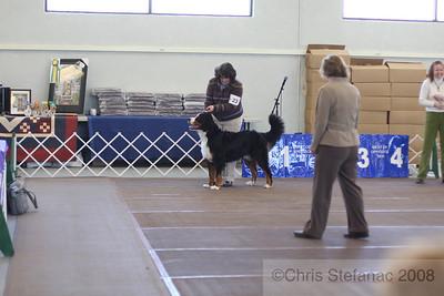 Sweeps 12-15 mos Dog-PV 09