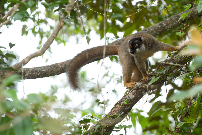 Madagascar_2013_FH0T8669.jpg