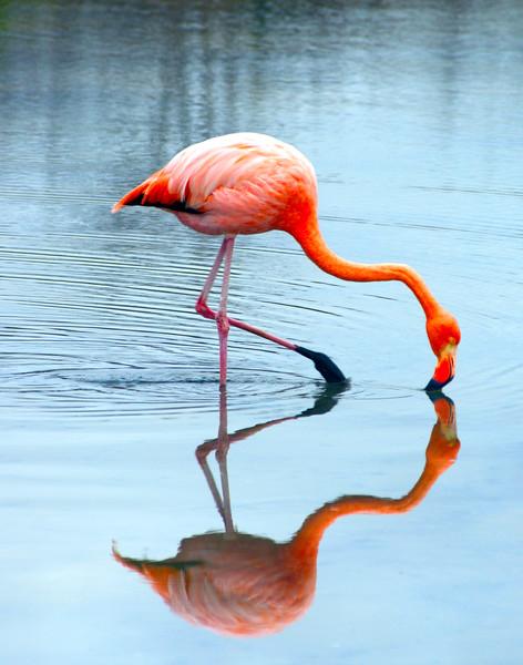 Flamingo 11x14.jpg