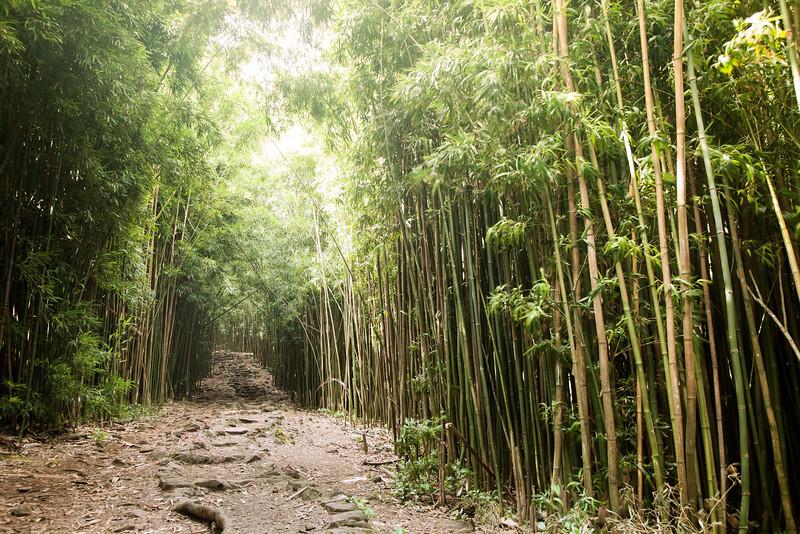bambooforrest.jpg