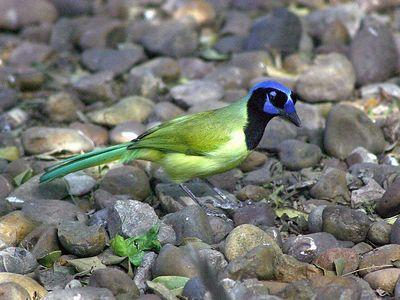Rio Grande Valley Birding Festival - Nov. 2004
