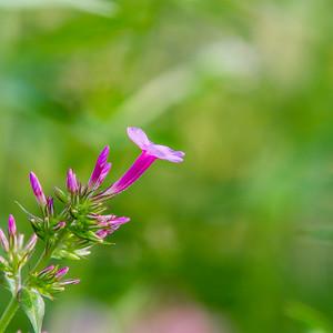 unknown-flower 45