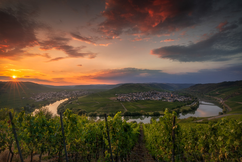 Moselle Intoxication
