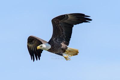 04/04/19 Conowingo Eagles