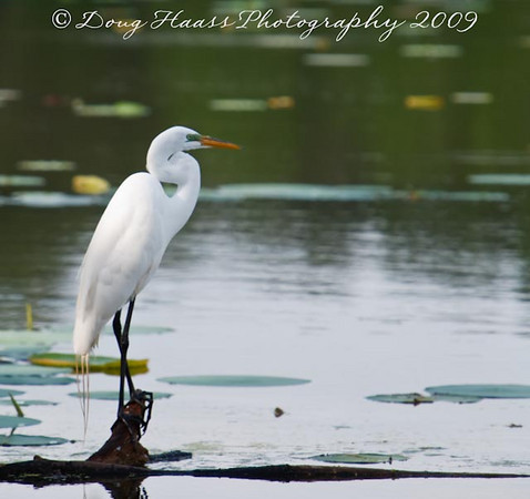 Brazos Bend State Park 2009