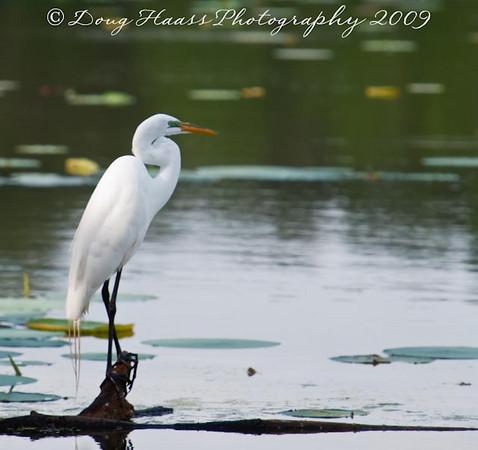 Brazos Bend State Park 2009