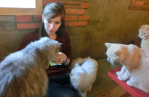 Cat Cafe Part II