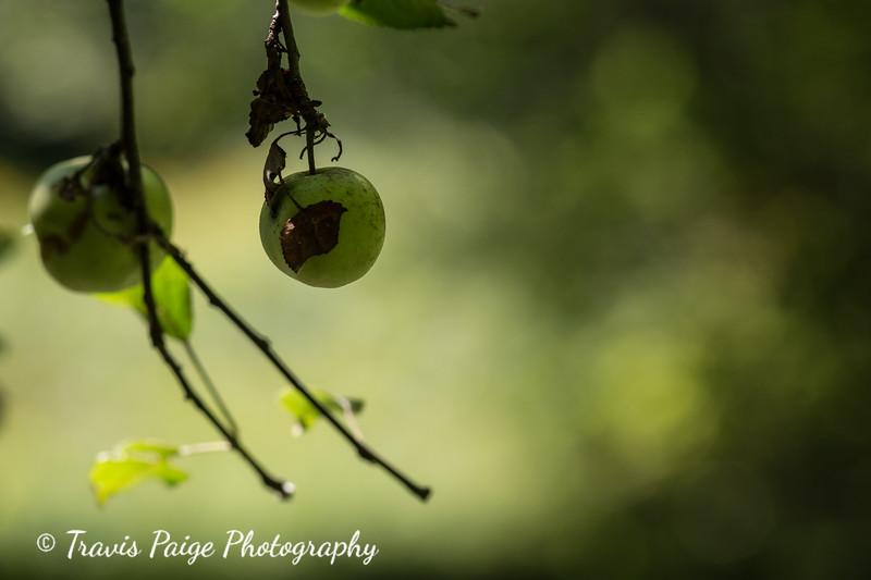 TravisPaigePhotography-6.jpg