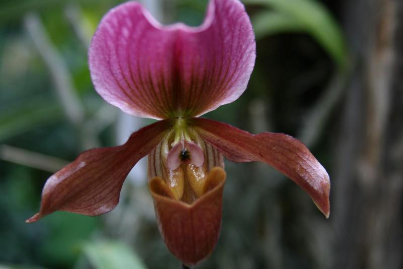 orchids 09 161.jpg