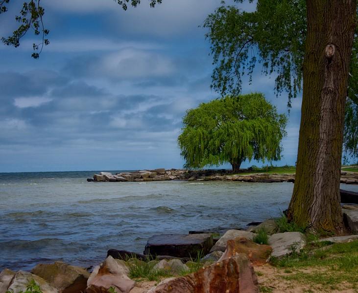 Erie Tree.jpeg
