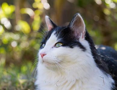 Neighborhood Cats