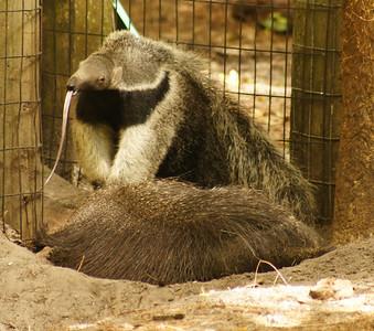 brevard zoo 5-25-12