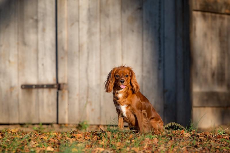 16_1024_buntingdogs-17.jpg