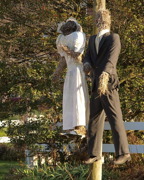 terhune scarecrows.jpg