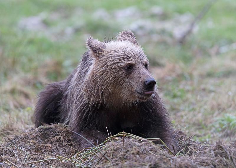 2nd year  cub