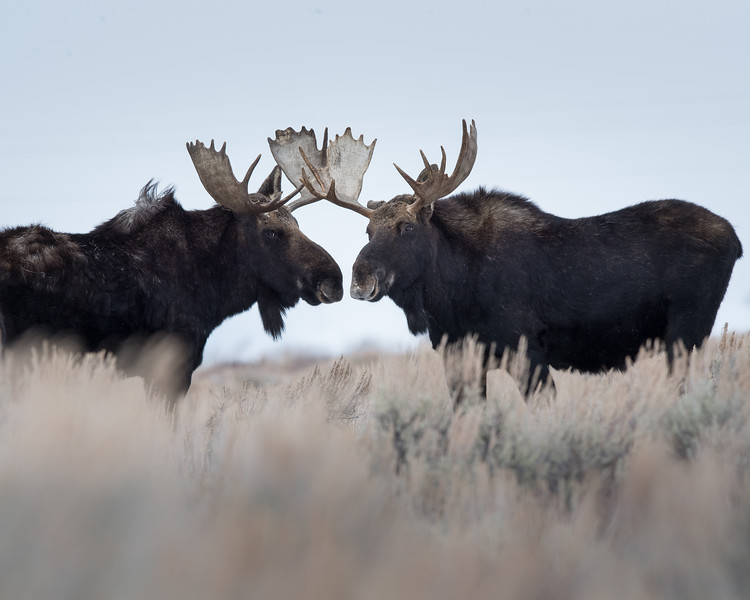 Yellowstone National Park, Wyoming USA