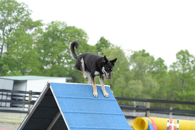 Princeton/Lower Bucks Dog Training Club AKC Agility Trial May 15-17
