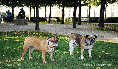 Dogs in Paris