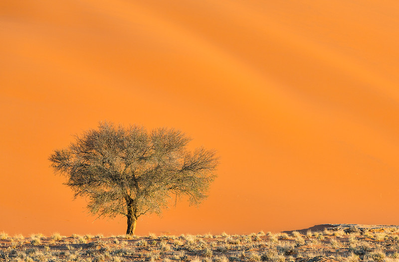 Namibia-lone-tree.jpg