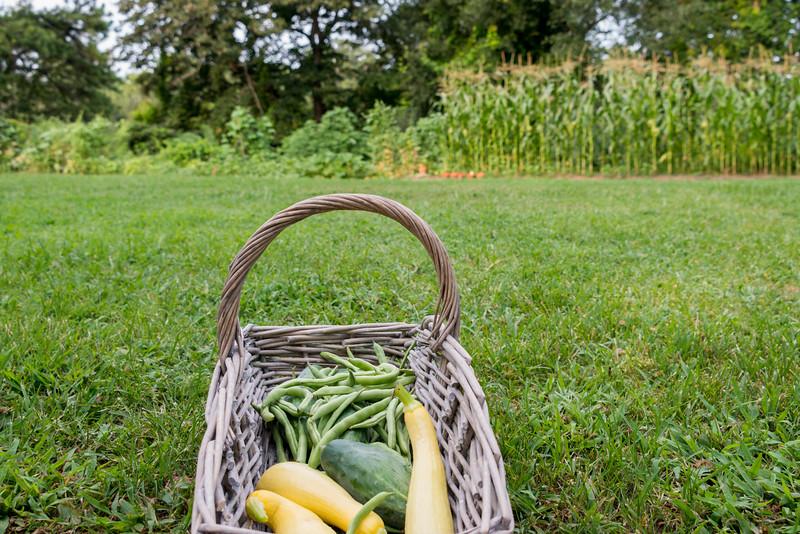 cmp Farm Chastain-7.jpg