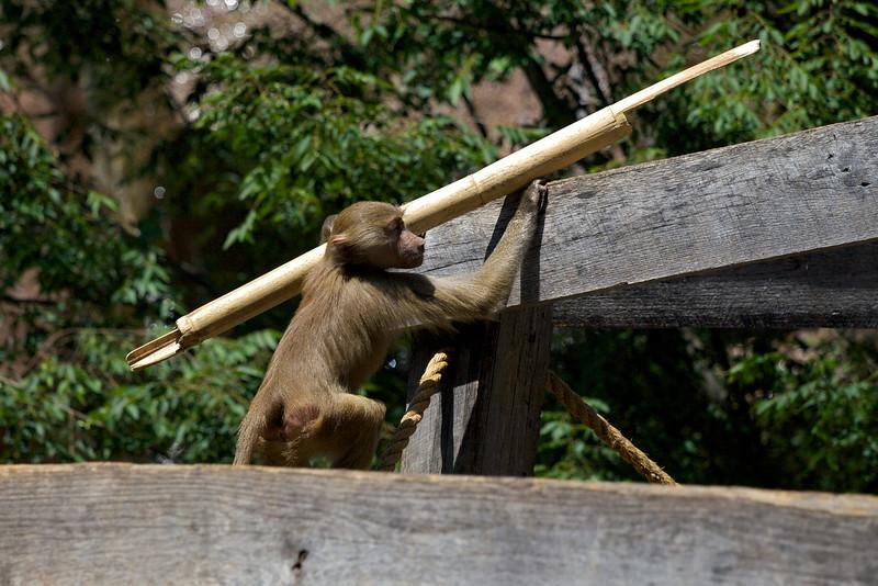 Zoo_Trip_22.jpg