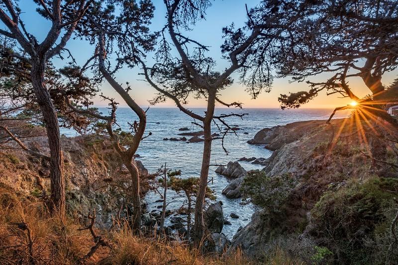 Sunburst Through the Pines
