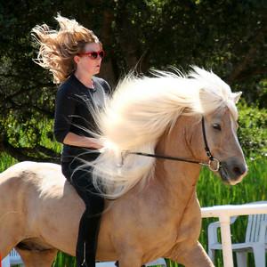Miscellaneous horses