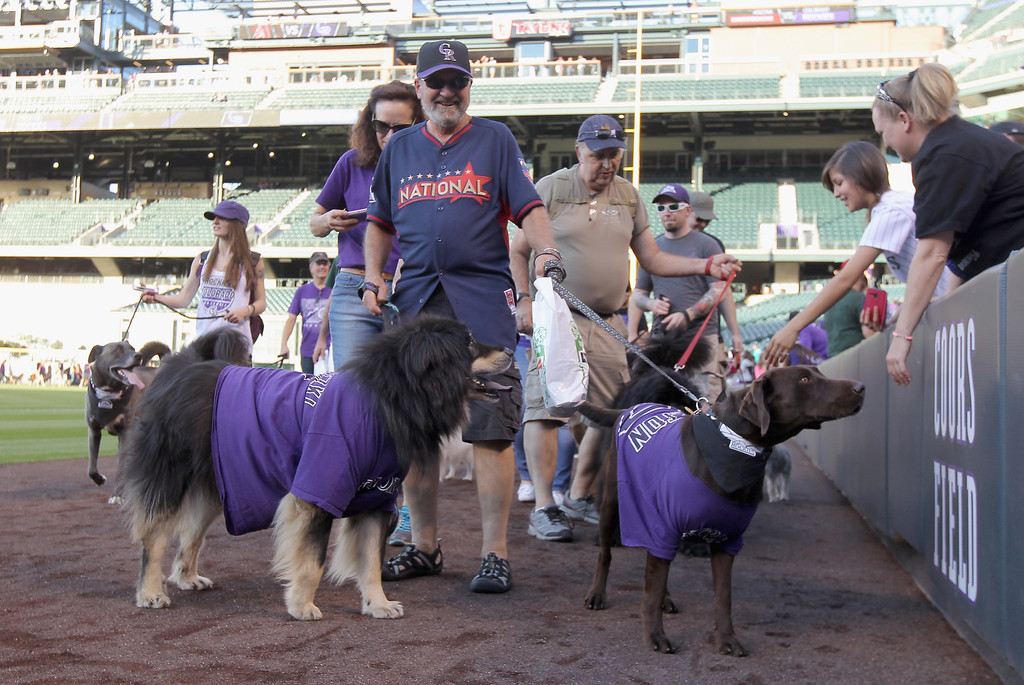 . DENVER, CO - SEPTEMBER 18:  Fans walk their dogs around the warning track as part of Bark at the Park night before the Arizona Diamondbacks face the Colorado Rockies at Coors Field on September 18, 2014 in Denver, Colorado.  (Photo by Doug Pensinger/Getty Images)