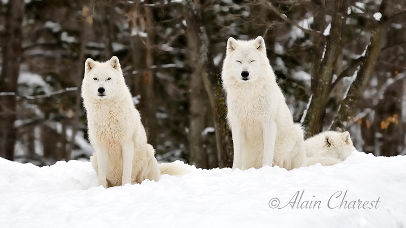 Animalier_APC1810.jpg
