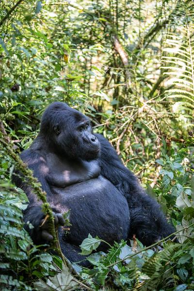 Uganda_T_Gor-374.jpg