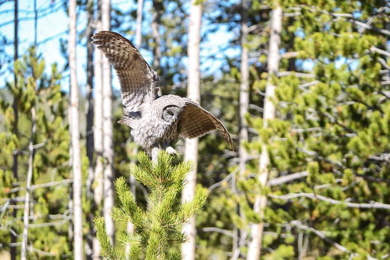 Fall Trip Wyoming & Montana 2016 (108 of 193).jpg