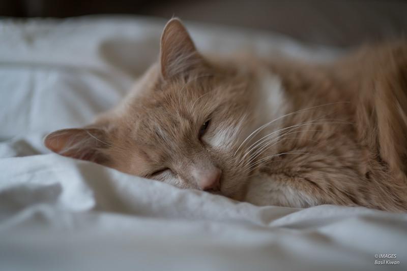 Mojo napping.jpg