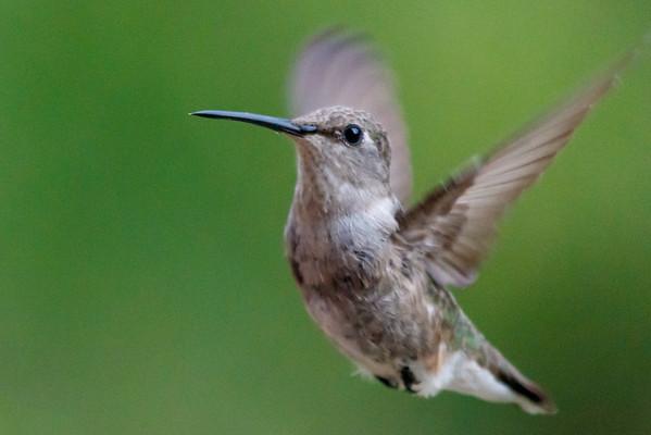 Pedernales Falls Bird Blind visit - Fri, Jul 31, 2015
