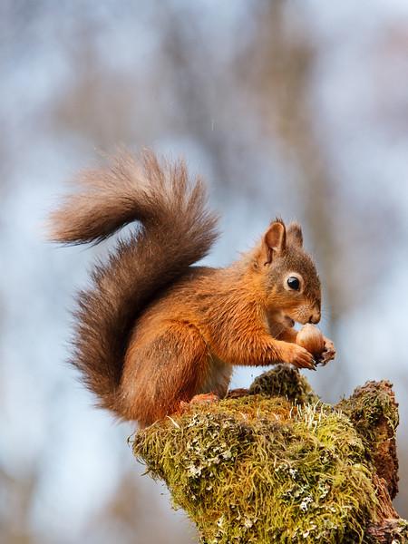 Mmmm Hazelnuts!