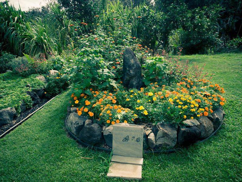 ritz carleton garden butterflies.jpg