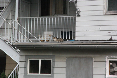 Cat on Roof of Home, Tamaqua (7-19-2012)