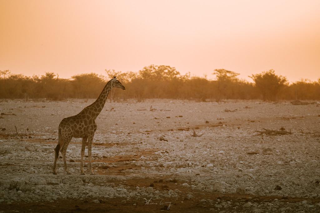 埃托沙國家公園 Etosha National Park 介紹與旅行建議 by 旅行攝影師 張威廉 Wilhelm Chang