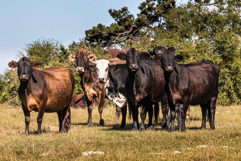 Texas2014-8033.jpg