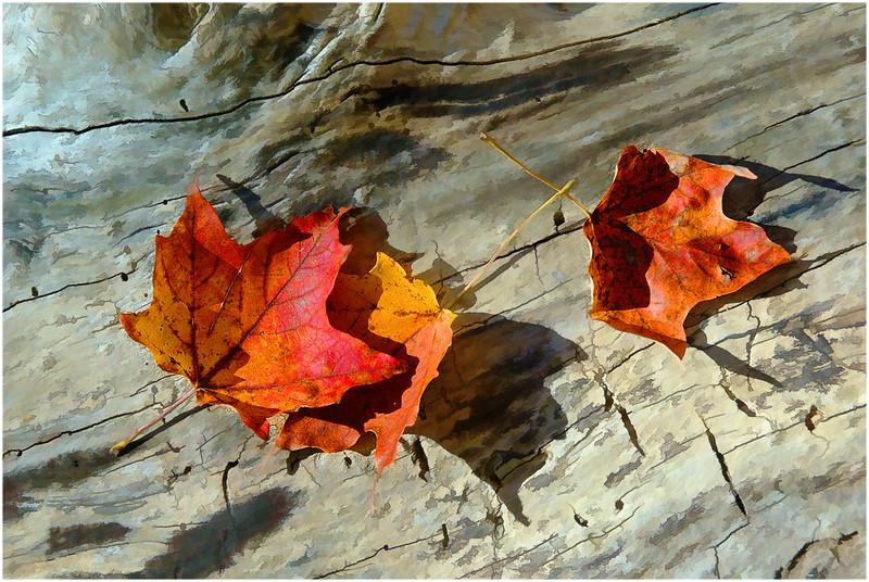 Img-dci-Groupn 2-06-16-Leaves on Log.jpg
