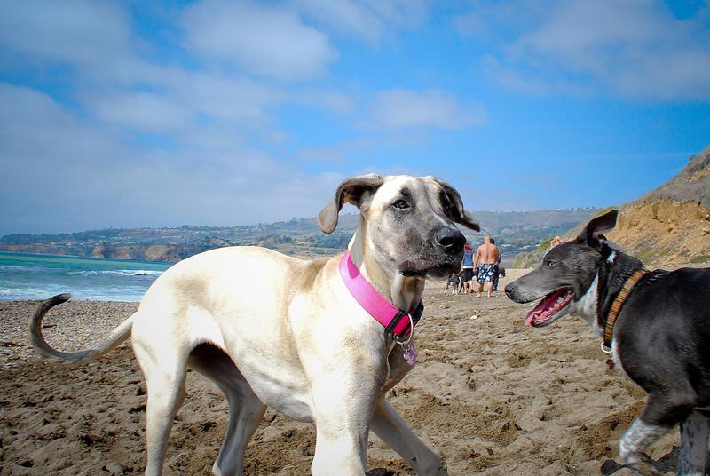dogs_beach-094.jpg