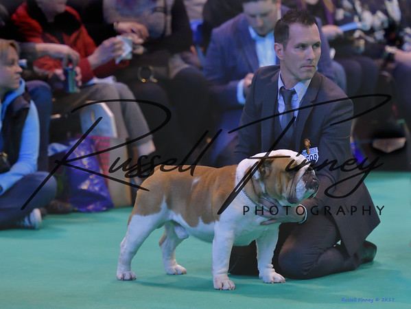 Crufts Dog 1-338
