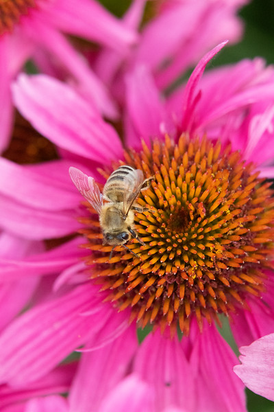 2020-07-24_Royal_Botanical_Gardens
